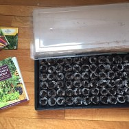 Oh, plant babies, I love you – and a gardening giveaway!