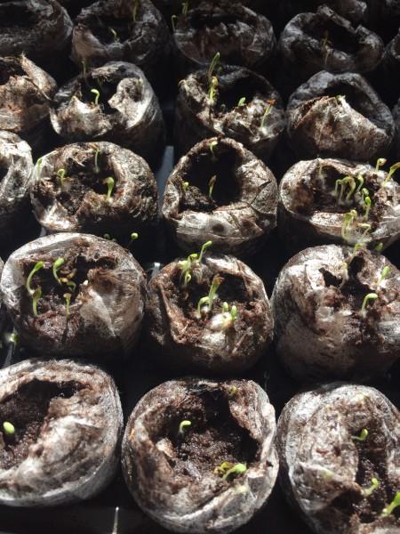 Plant babies!